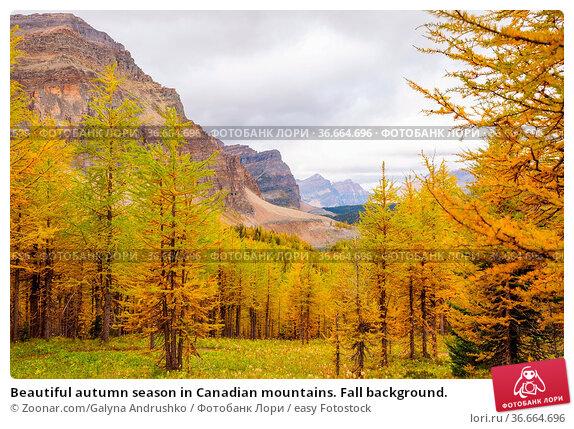 Beautiful autumn season in Canadian mountains. Fall background. Стоковое фото, фотограф Zoonar.com/Galyna Andrushko / easy Fotostock / Фотобанк Лори
