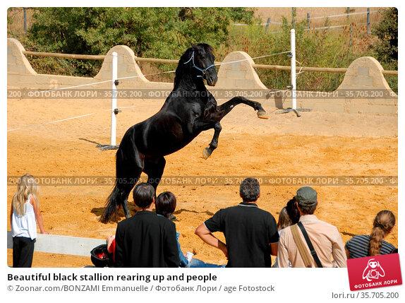 Beautiful black stallion rearing up and people. Стоковое фото, фотограф Zoonar.com/BONZAMI Emmanuelle / age Fotostock / Фотобанк Лори