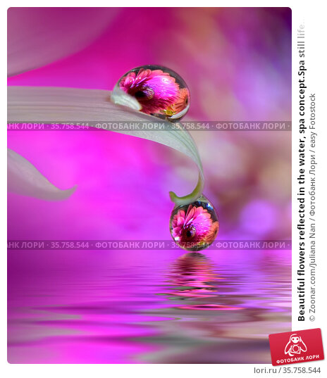 Beautiful flowers reflected in the water, spa concept.Spa still life... Стоковое фото, фотограф Zoonar.com/Juliana Nan / easy Fotostock / Фотобанк Лори