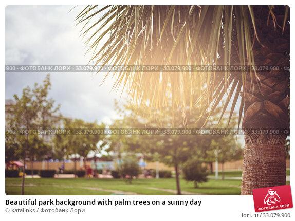 Купить «Beautiful park background with palm trees on a sunny day», фото № 33079900, снято 9 сентября 2017 г. (c) katalinks / Фотобанк Лори