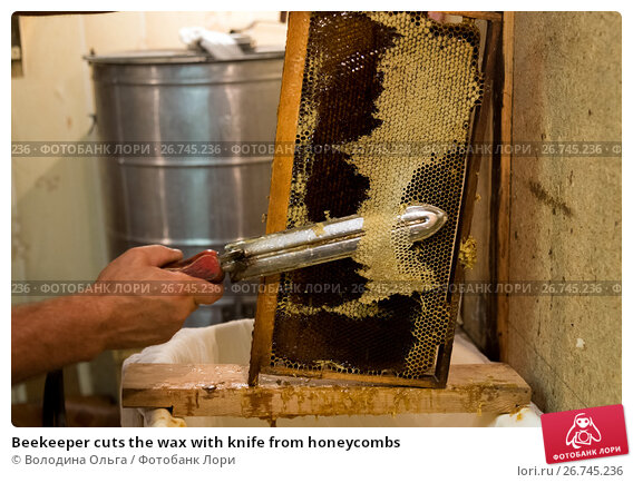Купить «Beekeeper cuts the wax with knife from honeycombs», фото № 26745236, снято 7 августа 2017 г. (c) Володина Ольга / Фотобанк Лори