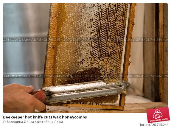 Купить «Beekeeper hot knife cuts wax honeycombs», фото № 26745244, снято 7 августа 2017 г. (c) Володина Ольга / Фотобанк Лори