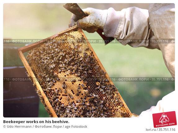 Beekeeper works on his beehive. Стоковое фото, фотограф Udo Herrmann / age Fotostock / Фотобанк Лори
