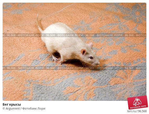 Бег крысы, фото № 96568, снято 7 октября 2007 г. (c) Argument / Фотобанк Лори