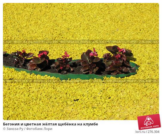 Купить «Бегония и цветная жёлтая щебёнка на клумбе», фото № 276304, снято 2 мая 2008 г. (c) Заноза-Ру / Фотобанк Лори