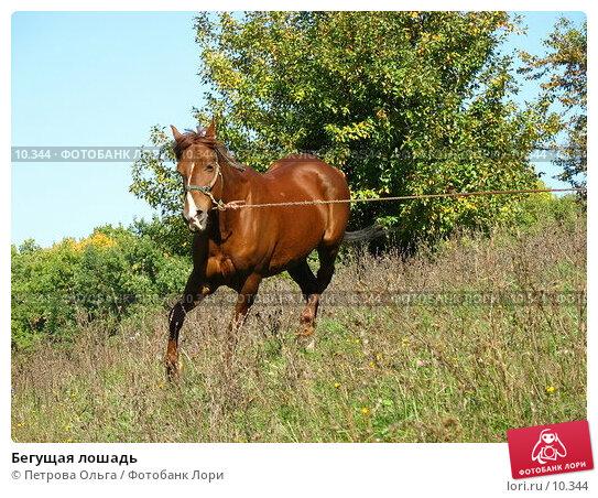 Бегущая лошадь, фото № 10344, снято 28 сентября 2006 г. (c) Петрова Ольга / Фотобанк Лори