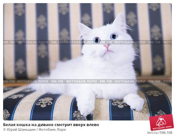 Белая кошка на диване смотрит вверх влево. Стоковое фото, фотограф Юрий Шаньшин / Фотобанк Лори