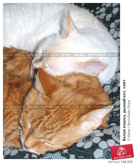 Белая кошка, рыжий кот, спят, фото № 148424, снято 12 октября 2007 г. (c) Иван / Фотобанк Лори