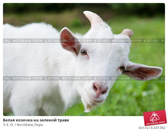 Купить «Белая козочка на зеленой траве», фото № 6337052, снято 26 июля 2014 г. (c) Екатерина Овсянникова / Фотобанк Лори
