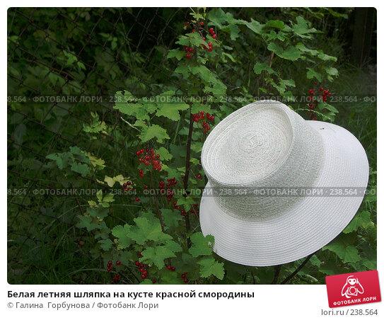 Белая летняя шляпка на кусте красной смородины, фото № 238564, снято 20 июня 2004 г. (c) Галина  Горбунова / Фотобанк Лори
