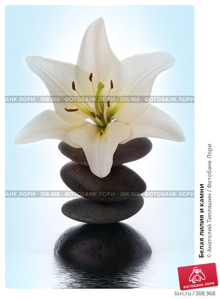 Купить «Белая лилия и камни», фото № 308968, снято 27 июня 2007 г. (c) Анатолий Типляшин / Фотобанк Лори