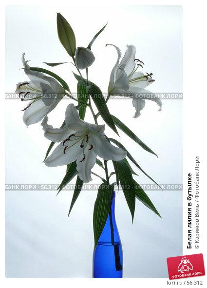 Купить «Белая лилия в бутылке», фото № 56312, снято 22 июня 2007 г. (c) Каримов Виль / Фотобанк Лори