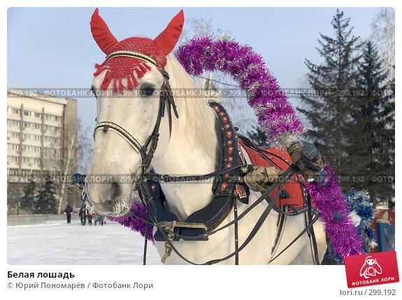 Белая лошадь, фото № 299192, снято 6 января 2008 г. (c) Юрий Пономарёв / Фотобанк Лори