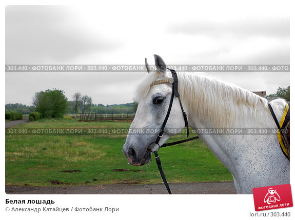 Белая лошадь, фото № 303440, снято 29 мая 2008 г. (c) Александр Катайцев / Фотобанк Лори