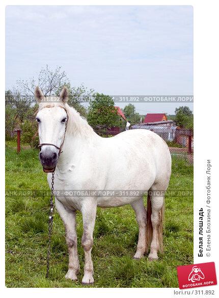 Белая лошадь, фото № 311892, снято 29 мая 2008 г. (c) Елена Блохина / Фотобанк Лори