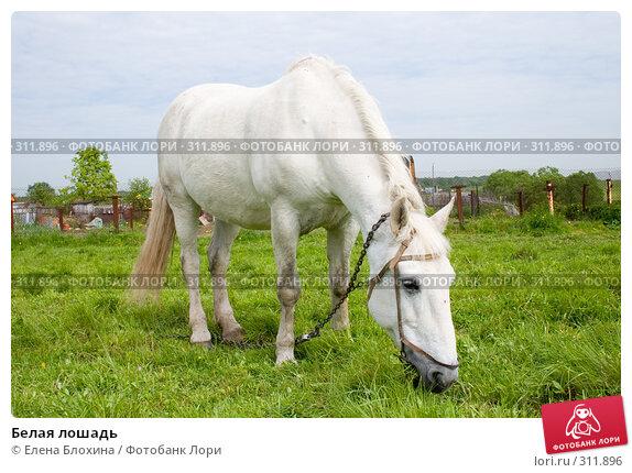 Белая лошадь, фото № 311896, снято 29 мая 2008 г. (c) Елена Блохина / Фотобанк Лори