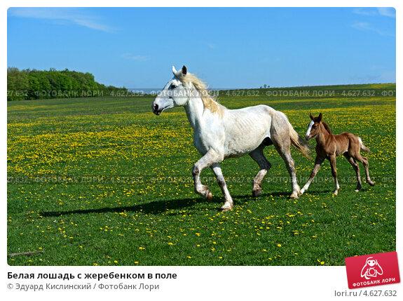 белые лошади лета