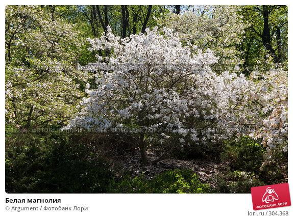 Купить «Белая магнолия», фото № 304368, снято 24 апреля 2008 г. (c) Argument / Фотобанк Лори