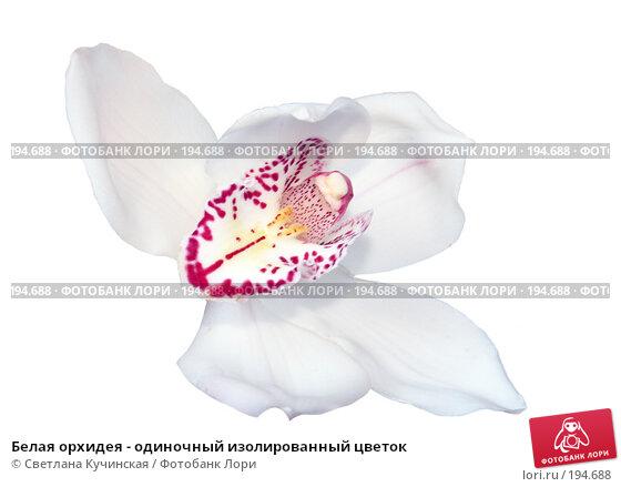 Белая орхидея - одиночный изолированный цветок, фото № 194688, снято 18 января 2017 г. (c) Светлана Кучинская / Фотобанк Лори