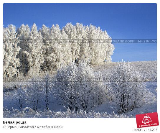 Купить «Белая роща», фото № 144216, снято 8 ноября 2007 г. (c) Герман Филатов / Фотобанк Лори