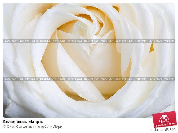 Белая роза. Макро., фото № 165340, снято 2 января 2008 г. (c) Олег Селезнев / Фотобанк Лори