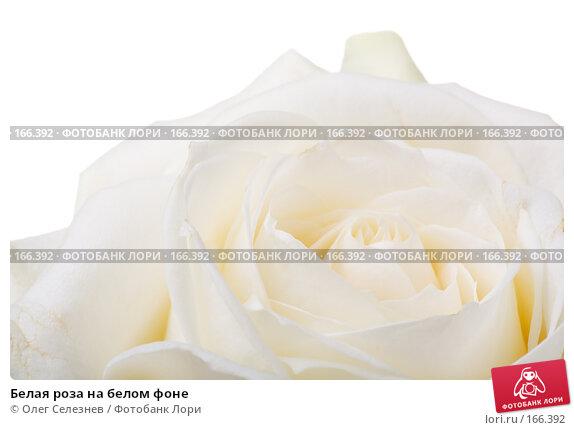 Белая роза на белом фоне, фото № 166392, снято 2 января 2008 г. (c) Олег Селезнев / Фотобанк Лори