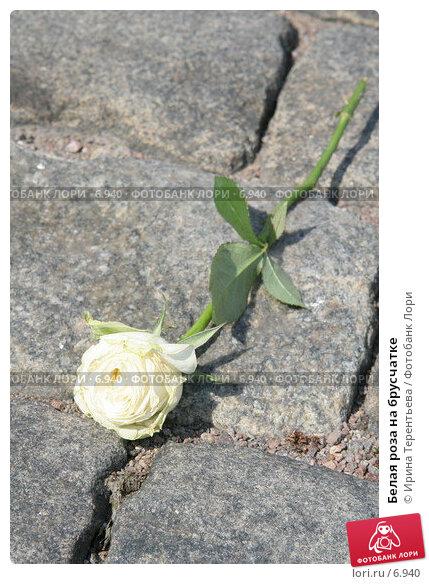 Белая роза на брусчатке, эксклюзивное фото № 6940, снято 13 августа 2005 г. (c) Ирина Терентьева / Фотобанк Лори