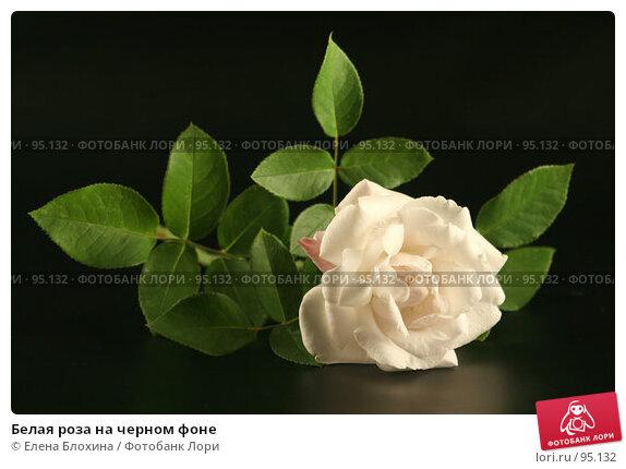 Белая роза на черном фоне, фото № 95132, снято 3 октября 2007 г. (c) Елена Блохина / Фотобанк Лори