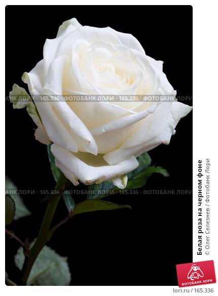 Белая роза на черном фоне, фото № 165336, снято 2 января 2008 г. (c) Олег Селезнев / Фотобанк Лори