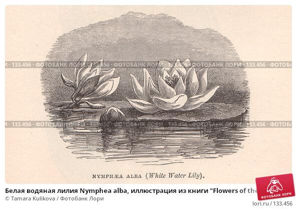 """Белая водяная лилия Nymphea alba, иллюстрация из книги """"Flowers of the field"""", издано в Лондоне в 1888, иллюстрация № 133456 (c) Tamara Kulikova / Фотобанк Лори"""