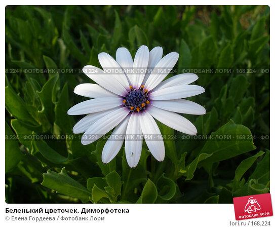 Беленький цветочек. Диморфотека, фото № 168224, снято 2 октября 2006 г. (c) Елена Гордеева / Фотобанк Лори