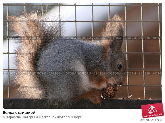 Белка с шишкой, фото № 211936, снято 5 февраля 2008 г. (c) Карасева Екатерина Олеговна / Фотобанк Лори