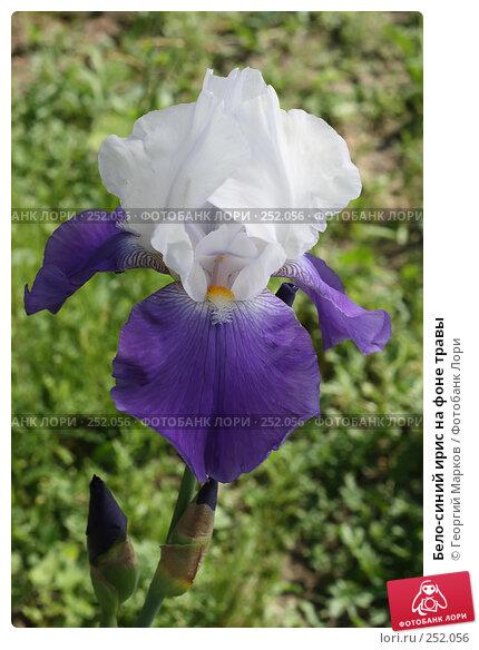 Бело-синий ирис на фоне травы, фото № 252056, снято 9 июня 2007 г. (c) Георгий Марков / Фотобанк Лори