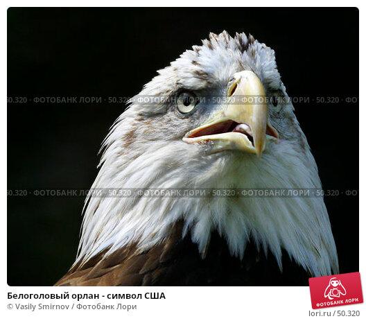 Купить «Белоголовый орлан - символ США», фото № 50320, снято 27 июля 2002 г. (c) Vasily Smirnov / Фотобанк Лори