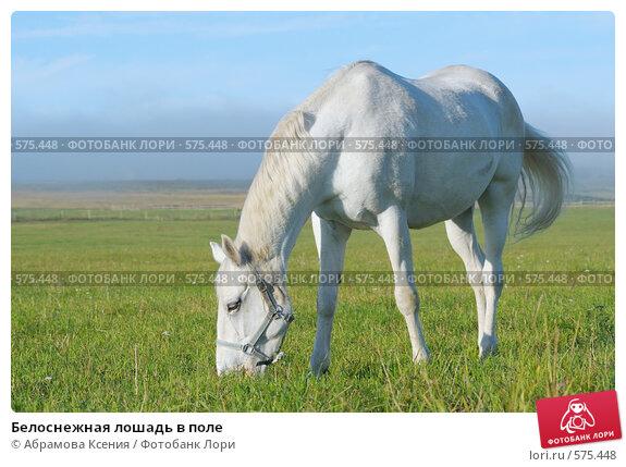 Купить «Белоснежная лошадь в поле», фото № 575448, снято 10 августа 2008 г. (c) Абрамова Ксения / Фотобанк Лори