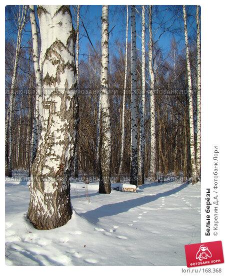 Белые берёзы, фото № 168368, снято 5 января 2008 г. (c) Карелин Д.А. / Фотобанк Лори