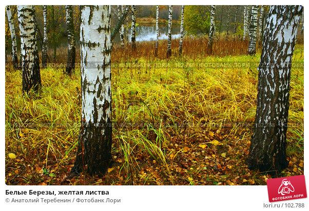 Белые Березы, желтая листва, фото № 102788, снято 21 июля 2017 г. (c) Анатолий Теребенин / Фотобанк Лори