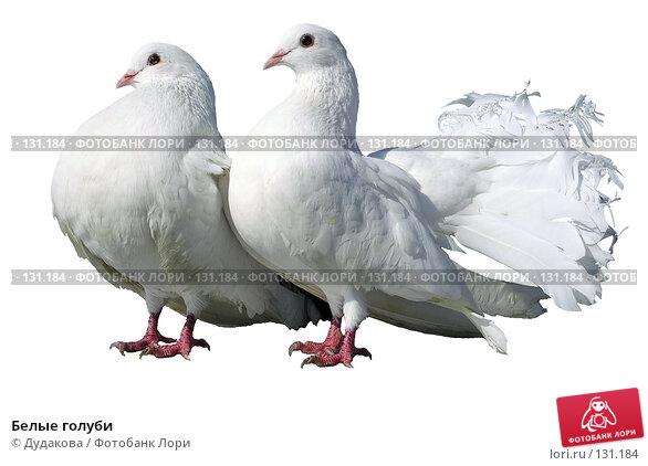 Купить «Белые голуби», фото № 131184, снято 21 мая 2018 г. (c) Дудакова / Фотобанк Лори