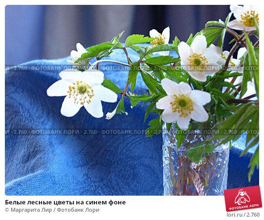 Белые лесные цветы на синем фоне, фото № 2760, снято 1 мая 2006 г. (c) Маргарита Лир / Фотобанк Лори