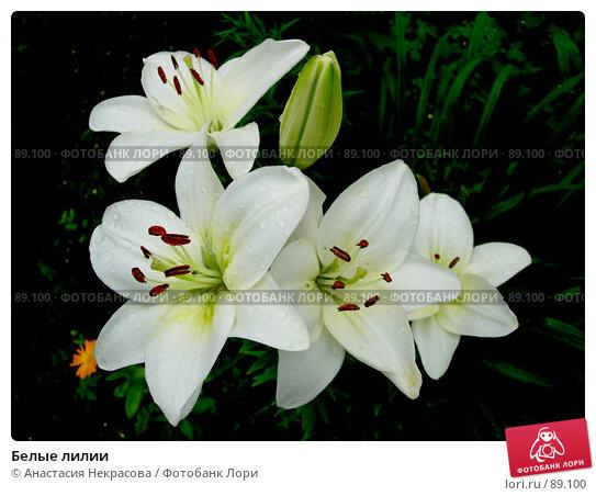 Белые лилии, фото № 89100, снято 21 июля 2007 г. (c) Анастасия Некрасова / Фотобанк Лори