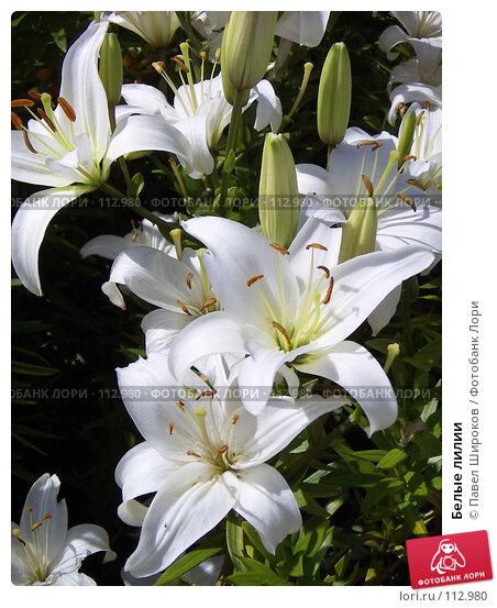 Белые лилии, эксклюзивное фото № 112980, снято 26 мая 2017 г. (c) Павел Широков / Фотобанк Лори