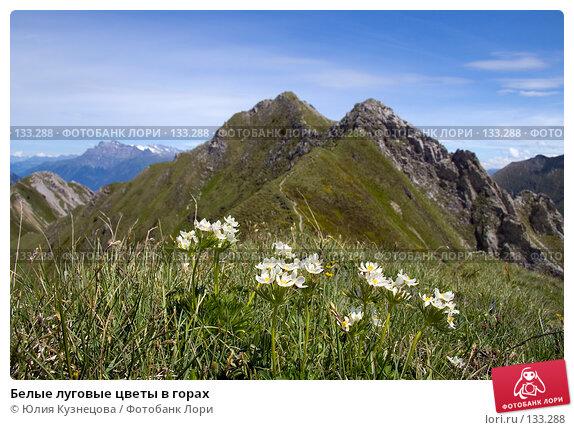 Белые луговые цветы в горах, фото № 133288, снято 17 июня 2007 г. (c) Юлия Кузнецова / Фотобанк Лори