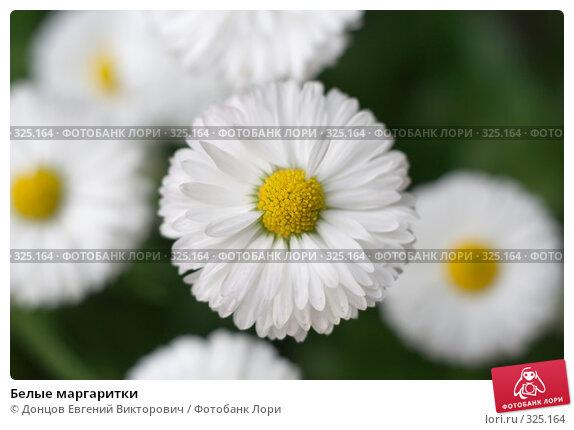Белые маргаритки, фото № 325164, снято 16 июня 2008 г. (c) Донцов Евгений Викторович / Фотобанк Лори