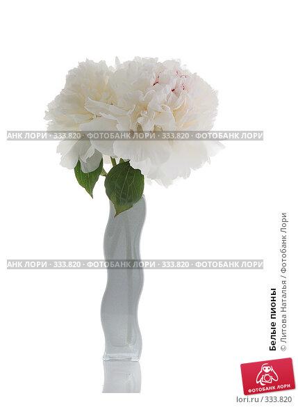 Купить «Белые пионы», фото № 333820, снято 24 июня 2008 г. (c) Литова Наталья / Фотобанк Лори