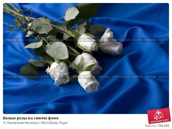 Белые розы на синем фоне, фото № 108836, снято 2 ноября 2007 г. (c) Лисовская Наталья / Фотобанк Лори