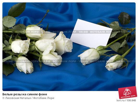 Белые розы на синем фоне, фото № 108848, снято 2 ноября 2007 г. (c) Лисовская Наталья / Фотобанк Лори
