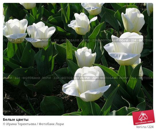 Белые цветы, эксклюзивное фото № 224, снято 7 мая 2004 г. (c) Ирина Терентьева / Фотобанк Лори
