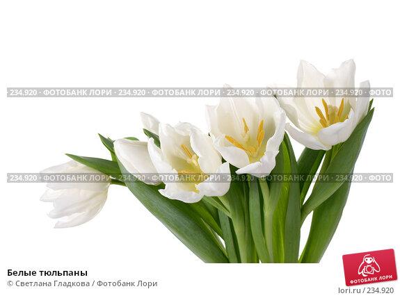 Белые тюльпаны, фото № 234920, снято 12 января 2008 г. (c) Cветлана Гладкова / Фотобанк Лори