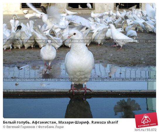 Белый голубь. Афганистан, Мазари-Шариф. Rawaza sharif, фото № 93072, снято 5 октября 2007 г. (c) Евгений Горюнов / Фотобанк Лори
