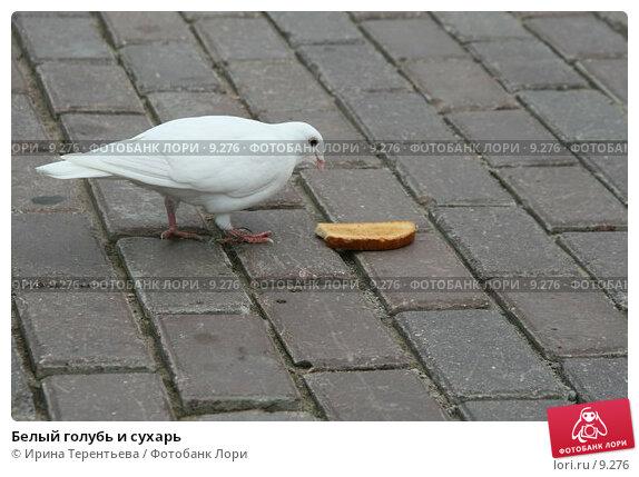Белый голубь и сухарь , эксклюзивное фото № 9276, снято 1 июля 2006 г. (c) Ирина Терентьева / Фотобанк Лори